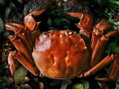 苏州立法保护阳澄湖大闸蟹,规范水产品产业