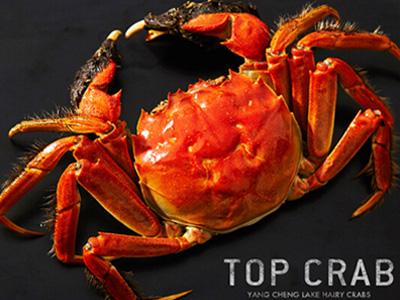浅谈高温对大闸蟹的影响,大闸蟹寿命、年龄相关因子!