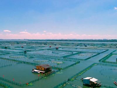 大闸蟹养殖进入4.0时代!
