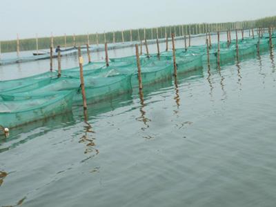 苏州太湖大面积缩减养殖水域  4.5万亩围网养殖全部拆除