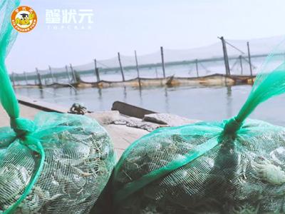阳春三月披绿装,阳澄湖上投苗忙