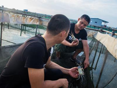 八月中旬阳澄湖里的大闸蟹状况几何?