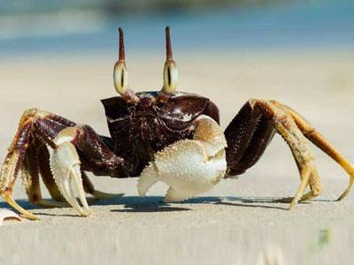 盘点国内外一些奇特螃蟹