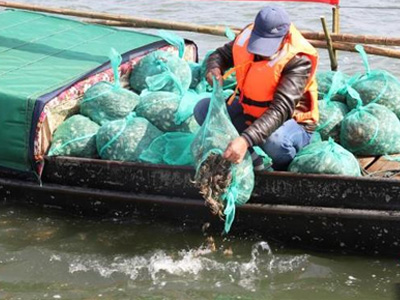 2020年春太湖80万只蟹苗纯天然放养