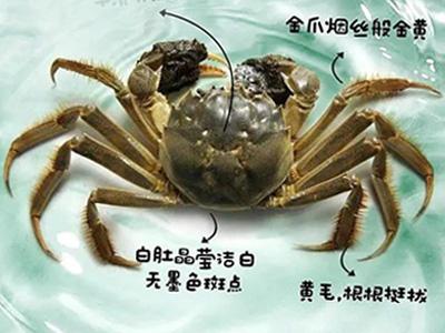 湖中有蟹初长成 | 从大眼幼体到扣蟹之路