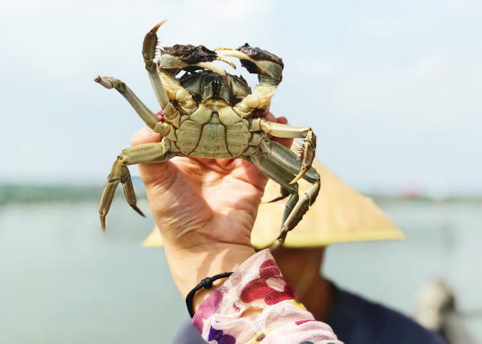 六月黄大闸蟹也不小了