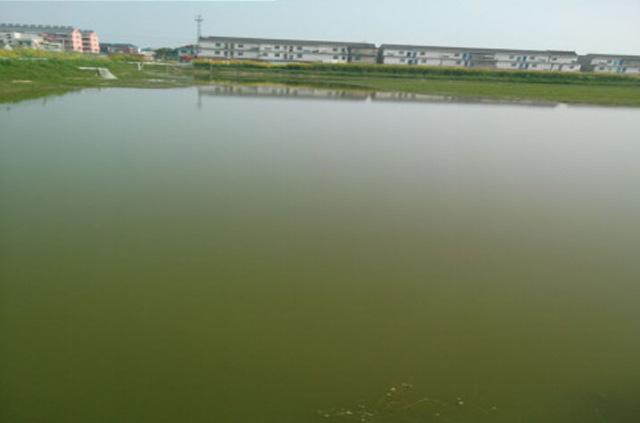 大闸蟹养殖老绿水