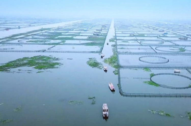 大闸蟹养殖2019
