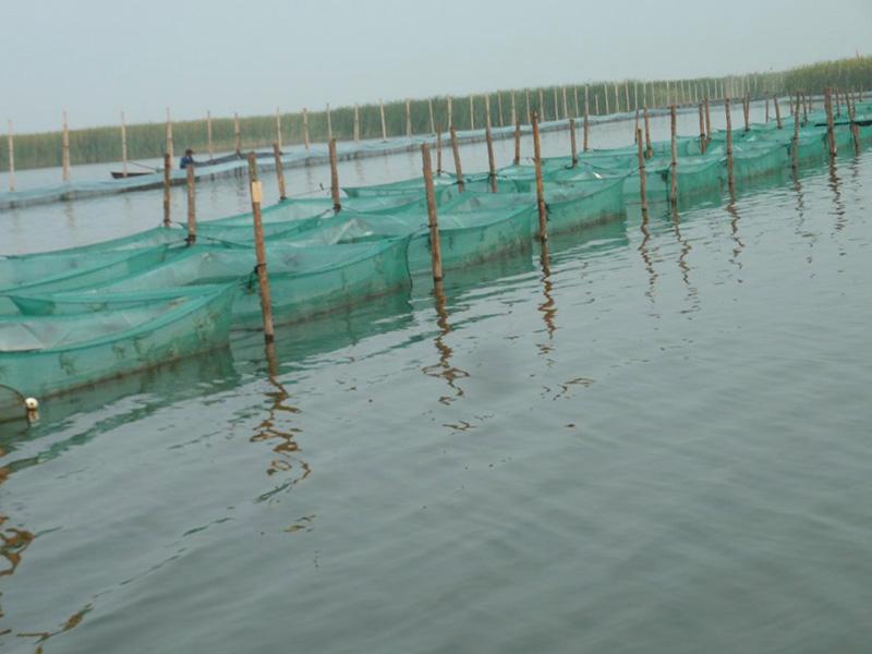 大闸蟹围网养殖