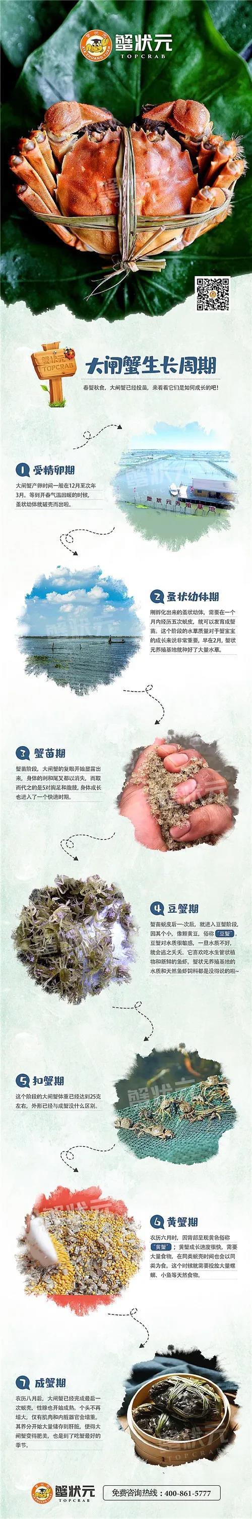大闸蟹长成周期