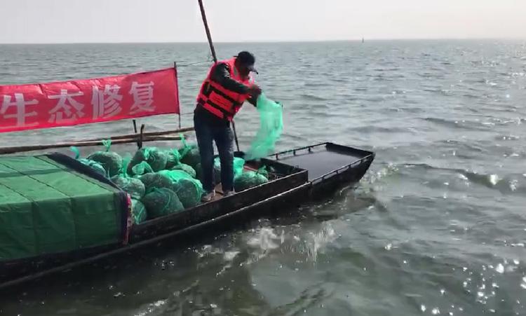 太湖投放蟹苗