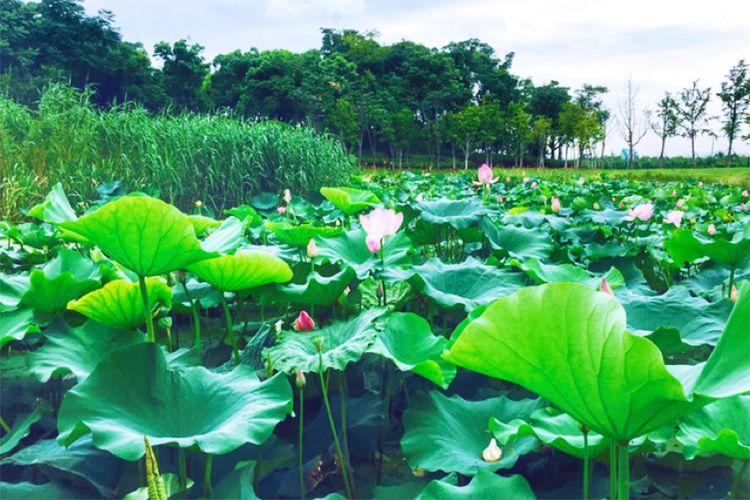 莲花岛风景