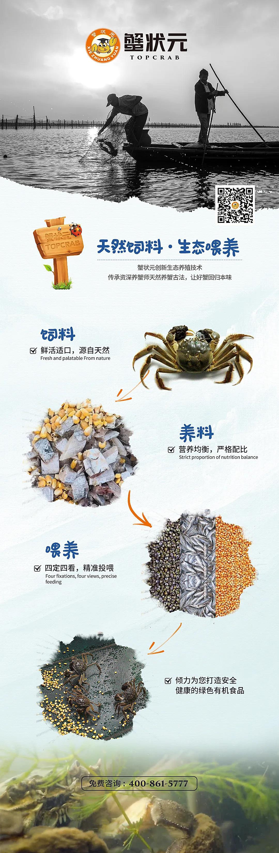 蟹状元大闸蟹养蟹过程