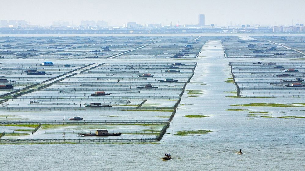 阳澄湖大闸蟹养殖