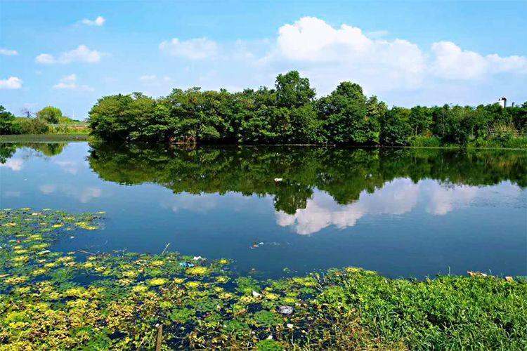 阳澄湖美景