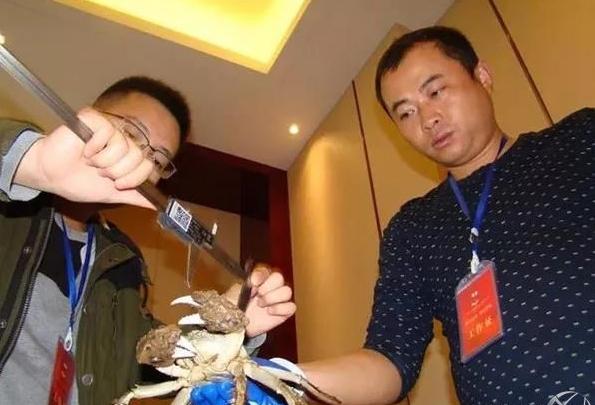 大闸蟹蟹王测量