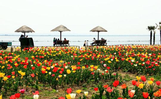 三月风光无限好,阳澄春景亦流连!