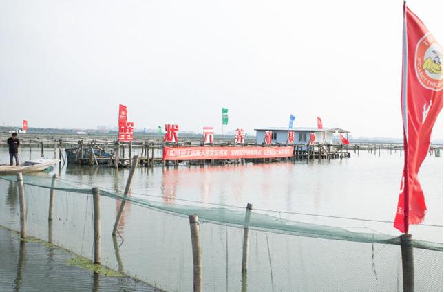 蟹状元阳澄湖大闸蟹养殖基地