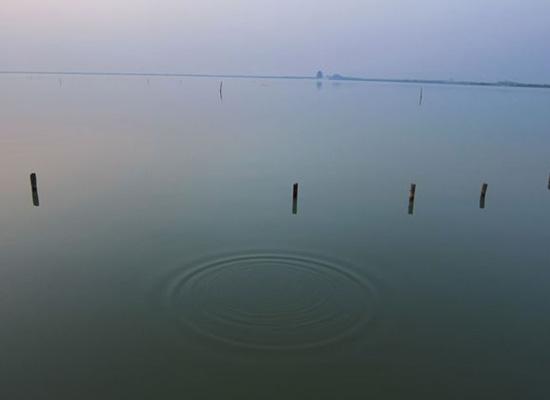 六月末了,此时的阳澄湖大闸蟹需要加倍呵护!