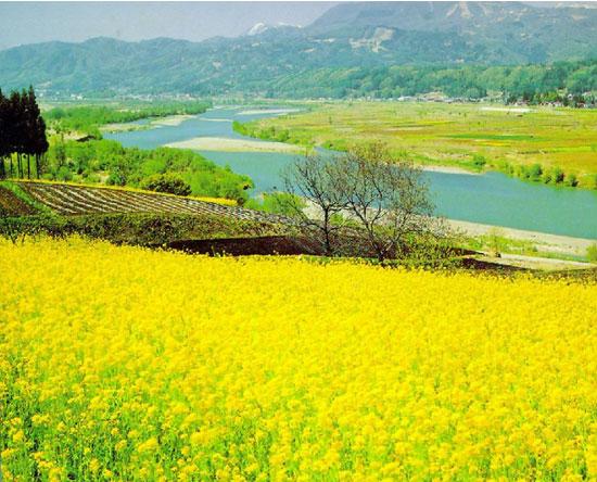 阳澄湖:春风十里,不如来看油菜花的你~